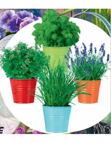 Vasetti in latta pronto semina Hortus Composto da semi di piante aromatiche